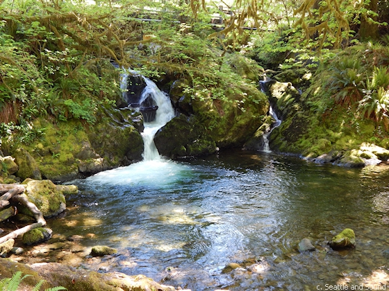 Small waterfall near Lake Quinault