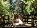 Forest trail bridge at Lake Quinault