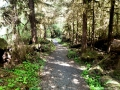 Rainforest trail at Lake Quinault