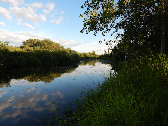 Mercer Slough Nature Park – Seattle and Sound