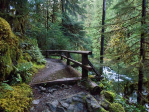 Cushman Lake hike